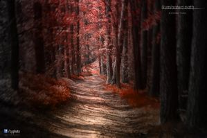 illuminated path by cpphoto