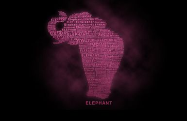 Elephant by nathanluther