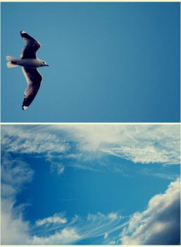 .free to fly by youcantstealmylove
