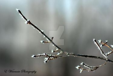 Frosted Branch by EWeirmeir
