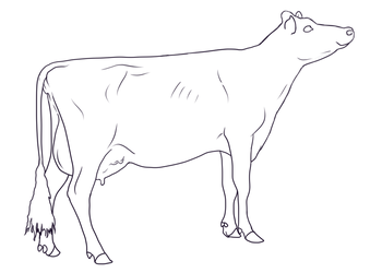 cow lines free by Grey-Terminal