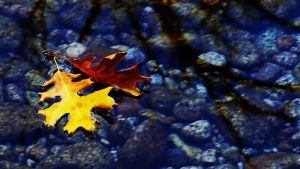 Leaves in a Stream by TickTix