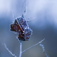 winter is close VI by JoannaRzeznikowska