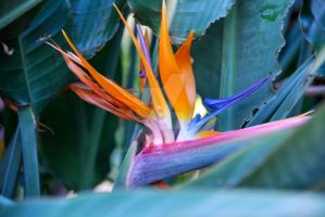 Bird of Paradise by oddjester