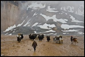Yak herders at Kagmara La by Dominion-Photography