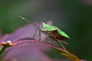 Green Insect by Keith-Killer