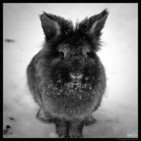 Fuzzy Snow Bunny by TheRenART