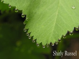 Curtain of raindrops by ShirlyRussel