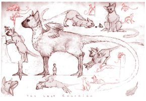 Last Guardian sketches... by SammyTorres
