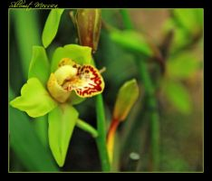 Orchid for B. by ShlomitMessica
