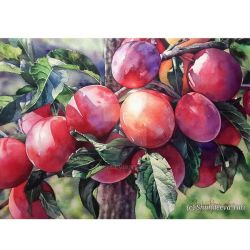 Red plums by Takir