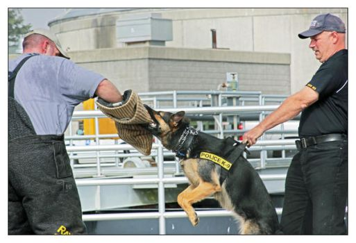 Training Day K-9 Unit by TeaPhotography