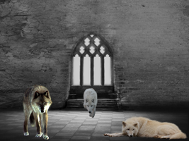 Wolves in a Building - Photomanipulation Practice by Pomegranate-RainWing