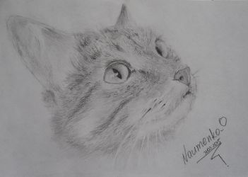 Cat Pencil Drawing by NaumenkoO