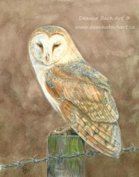 Barn Owl by sylph7sky
