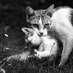 Caring mother by OlivierAccart