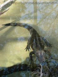 Chinese Alligator - Jan. 2014 by BCAnime