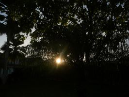Sun peaked in the trees by Paranoimagram