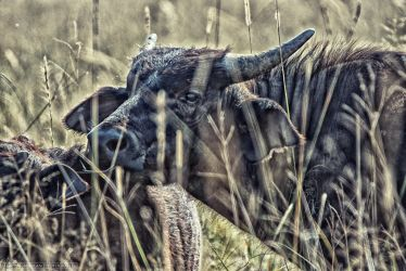 Hiding in the grass by Darth-Marlan