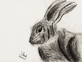 Graphite rabbit sketch by SulaimanDoodle