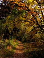 Autumn Path by helice93