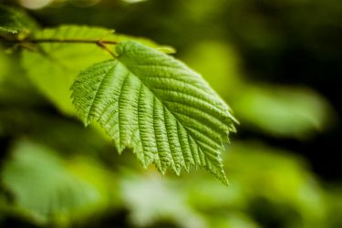 Leaf - Free stock photo by SuperSweetStock
