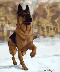 GSD by Valerie-great-Dane