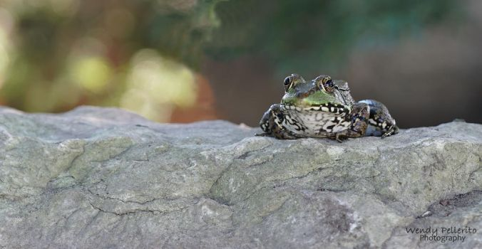 Frogs are never boring! by wendy-pellerito