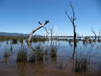 Australian Outback _the Marshes by Ven3215