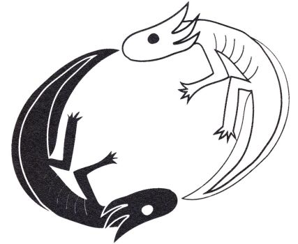 Yin yang Axolotls by Axol-The-Axolotl