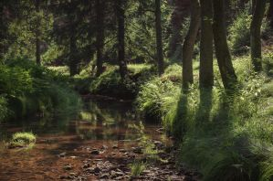 Trees by the river by aw-landscapes