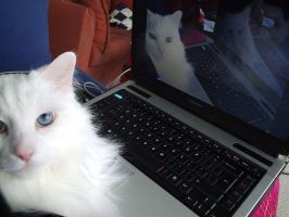 Recursive Cat is Recursive by Strayfish