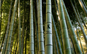 Gaia10 Bamboo Wallpaper by novoo