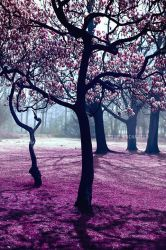 Pink blossom by EliseEnchanted