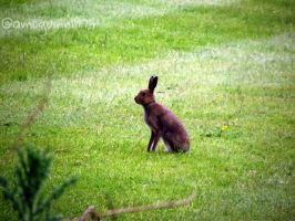 Hare by D1scipl31974