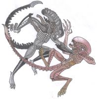 Xenomorph Battle by Dark-Hyena