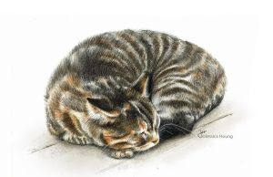 Sleeping Cat by JessicaHsiung