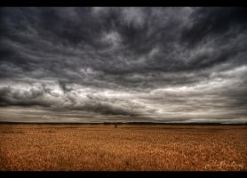 Fields under the open sky by wchild