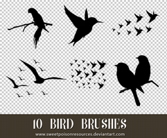 Bird Brushes - Photoshop by sweetpoisonresources