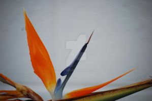 Birds of Paradise - Flower 04 by Sageous