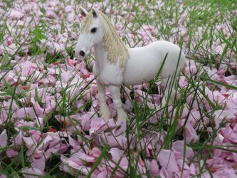 Collection Images: Shire Mare - Outdoor by CarolaFunder