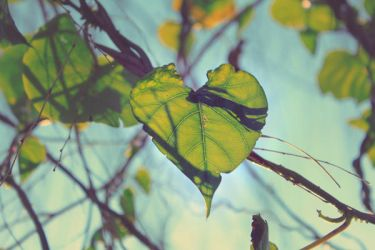 nature's heart. by lisz