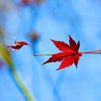Autumn Song by WhiteBook