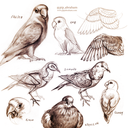 Bird sketches by oxpecker