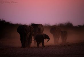 When the light fades... by MorkelErasmus