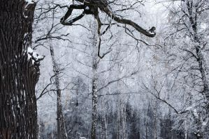 stock: winter forest 9(credit and show the result) by amka-stock