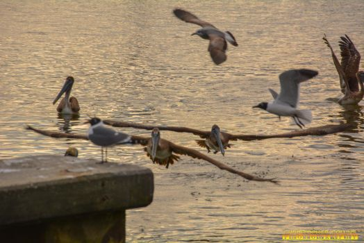 Pelican flying and Seagulls flying around port 2 by ENT2PRI9SE
