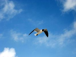 seagull by tjstrom