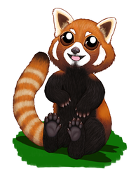 Red Panda by Elvan-Lady