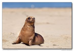 Teenager at the Beach by RoieG